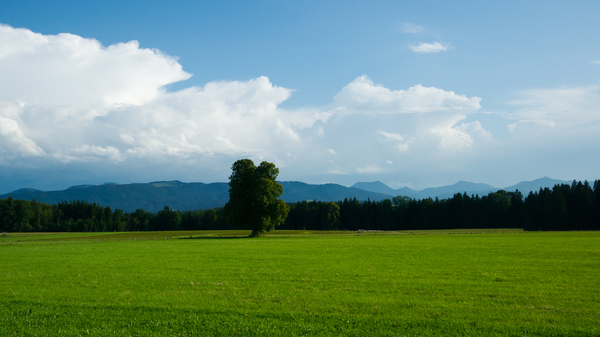Green Field Landscape with sin: Green Field Landscape with single Tree, Forest and Mountains in the Background