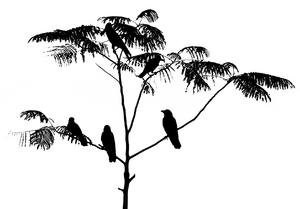 silhouette of birds: silhouette of crows