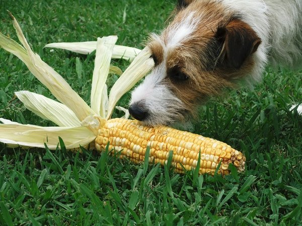 Corn Dog: is this good to eat?