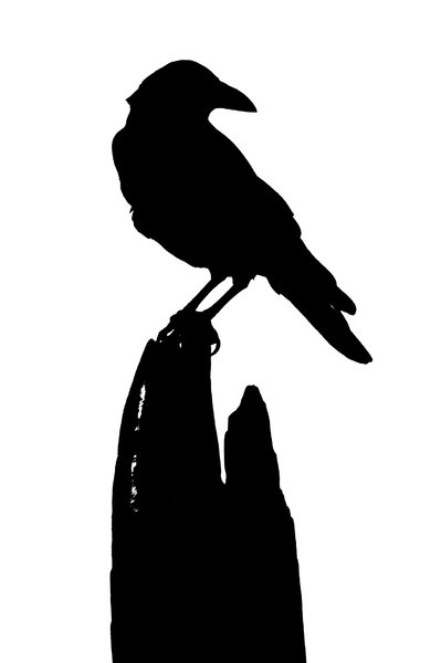 Black Bird: The silhouette of a crow