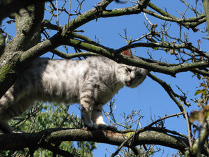 cat on tree: none