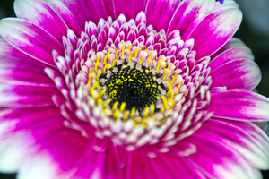 Flower macro: Macro of flowers I bought for my wife.
