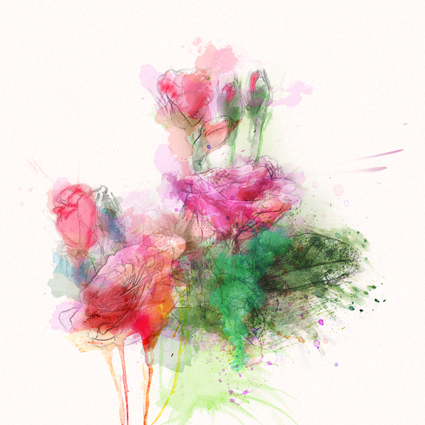 roses: watercolor drawing
