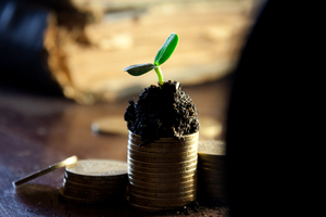 Golden coins in soil with youn: Golden coins in soil with young plant. Money growth concept.