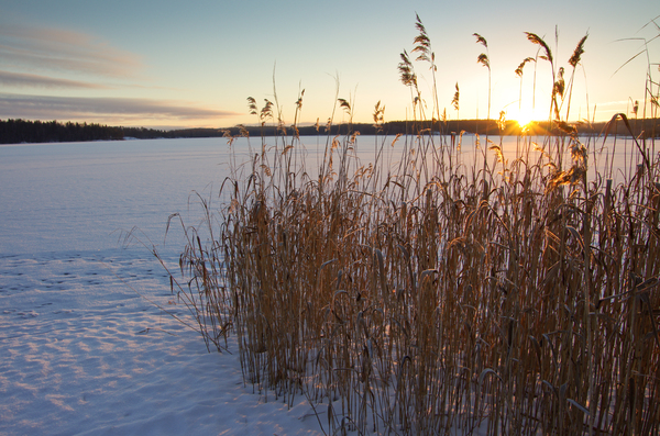 Winter-Reed: