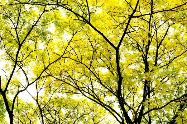 Leaves Of Gold 1: Snapshots of tree with golden yellow and green leaves