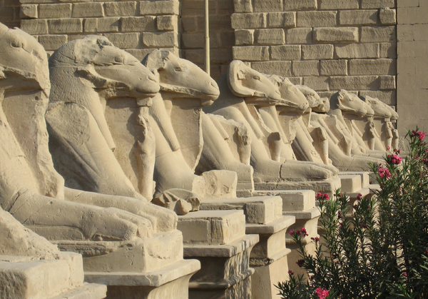 Karnak sphinxes: Avenue of ram-headed sphinxes  outside the first pylon at Karnak Temple, Thebes, Egypt.