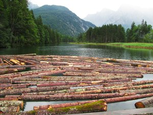 floating timber 3: logs on a mountain lake (Almsee in Upper Austria)