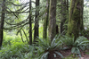 Prehistoric: Temperate rainforest close to the western Canada/USA border.
