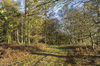 Autumn forest path: A path through mixed deciduous forest in West Sussex, England, in autumn.