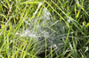 Dew covered web: A spider's web covered by morning dew in a meadow in England.