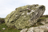 Boulder with lichens: A large lichen-covered boulder by the coast in Pembrokeshire, Wales.