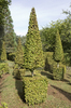 Topiary garden: Geometric topiary in a garden in the Dordogne, France.
