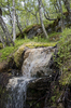 Woodland stream: A stream in woodland in Norway.