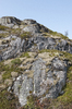 Mossy rocks: Rocks with typical heathy vegetation but also thick lumps of moss on the Lofoten Islands, Norway.
