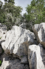 Boulders: Boulders eroded by wind and rain into sharp, hard flutes in northern Majorca, Balearic Islands, Spain.