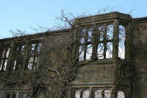 Ruined mansion: Wisteria encroaching on the windows of a mansion ruined by fire.