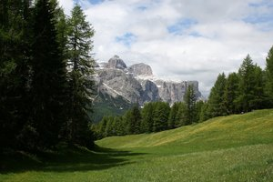Mountain meadow: A flower meadow in the Dolomite mountains, Italy.