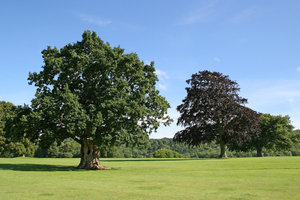 Parkland: Parkland in West Sussex, UK, in summer.