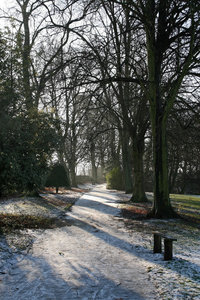 Park shadows: Sunlight slanting through snowy trees in a city park in England in winter.