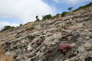 Rocky habitat: A rocky hillside in Sardinia, with clumps of red stonecrop and other plants.