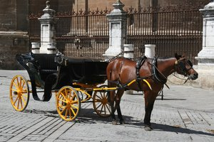 Horse and carriage 2: A horse and carriage in Seville, Spain.