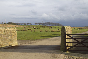 Moorland farm entrance: Entrance to a farm on moorland in northern England.
