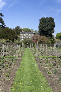 Vegetable garden: A large vegetable garden in England in spring.