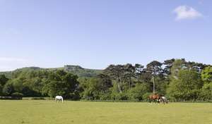 Landscape with horses: Horse meadows near the South Downs, West Sussex, England.