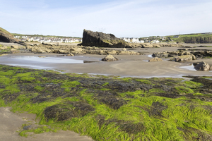 Rocky beach: Rocks and seaweed on a beach in Pembrokeshire, Wales.