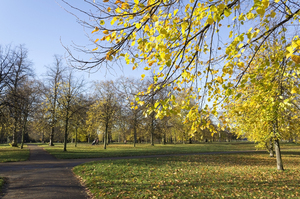 Park in autumn: A public park in London, England, in autumn.
