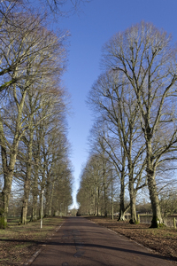 Avenue of trees: An avenue of trees in Hampshire, England, in winter.