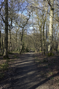 Forest walk: A forest footpath in winter in West Sussex, England.