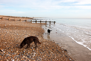 Dogs on the beach: Dogs on a beach in Sussex, England, in winter.