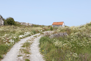 Old shed: A dilapidated old shed amongst wild flowers on the Lofoten Islands, Norway.