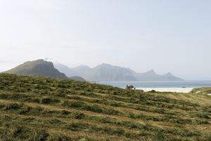 Meadow by the sea: A coastal hay meadow in the Lofoten Islands, Norway.
