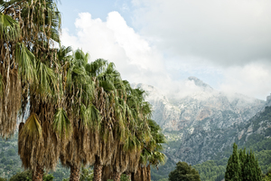 Palm trees and mountains: A garden with palm trees and view of mountains in Majorca, Balearic Islands, Spain.