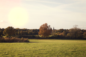 Autumn landscape: Autumn landscape in late afternoon light in West Sussex, England.