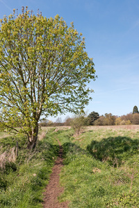 Countryside footpath: A rural footpath in spring in Surrey, England.