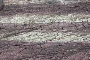 Striped rock texture: Strange purple and grey striped sedimentary rock on the coast of northern Cornwall, England.