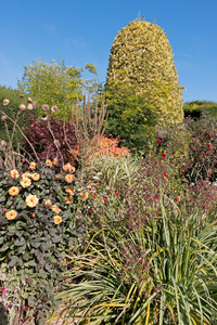 Autumn flower border: Perennial flowers in autumn in a garden in England.