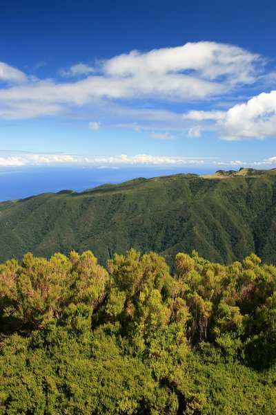 Green mountains: Mountains of the high inland area of Madeira (c. 2000m), covered in laurisilvan native forest.