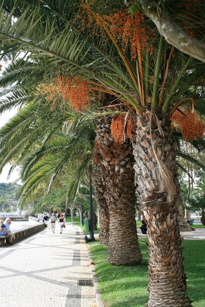 Funchal promenade: A promenade beside the harbour in Funchal, Madeira.
