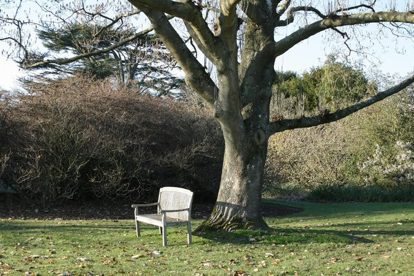 Garden seat: A wooden seat in a garden in West Sussex, England, in late autumn.