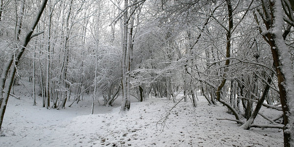 Deepest winter: Three-shot photomerge of woodland in West Sussex, England, after a blizzard.