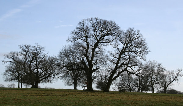 Tree silhouettes: Silhouettes of trees in a park in West Sussex, England, in winter.
