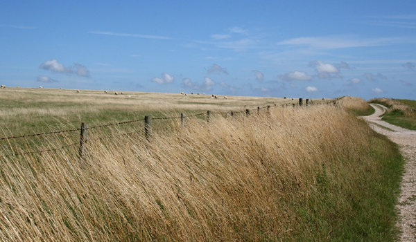 South Downs way: Field,verge and track of the South Downs, West Sussex, England.
