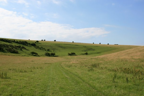 Meadow track: A farmer's track through a meadow on the South Downs, West Sussex, England.