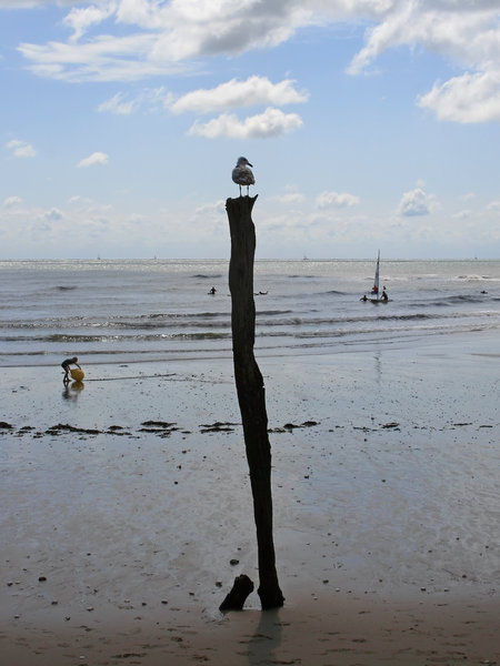Seagull perch: A seagull perched on a mooring post at low tide on the coast of Kent, England.