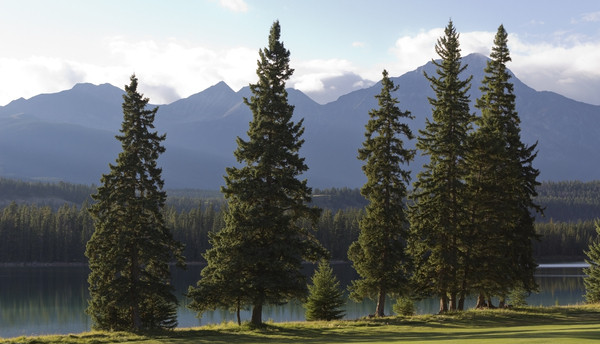 Conifer landscape: Lakeside conifers in evening light in Jasper, Canada.